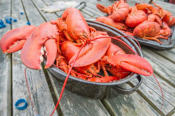 """""""Alobster will take only 7-12 minutes to cook,""""Aldrich said."""
