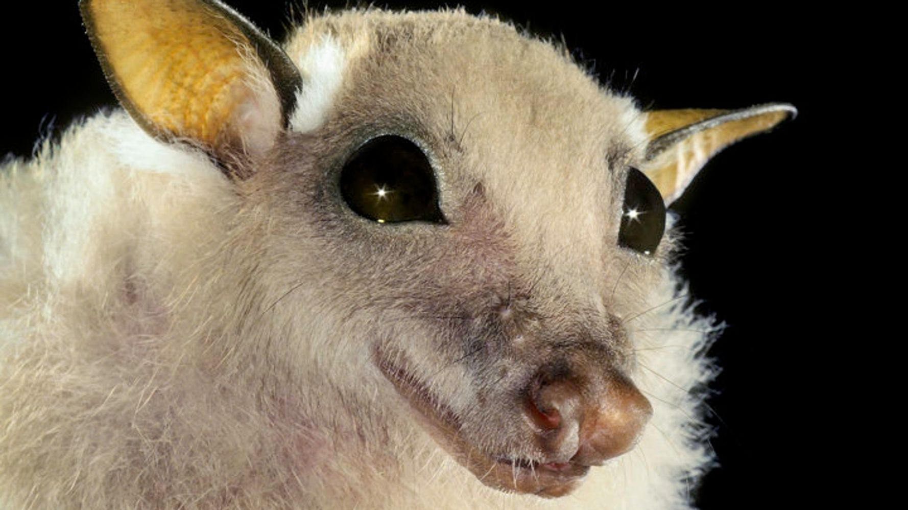 Глаза мыши картинки