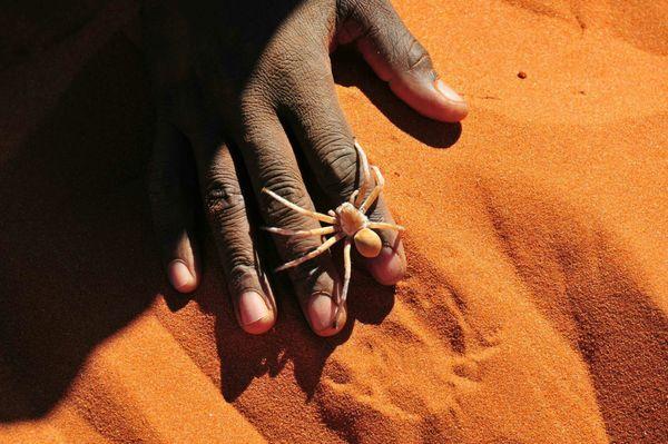 Namib Desert, Namib-Naukluft National Park, Namibia.