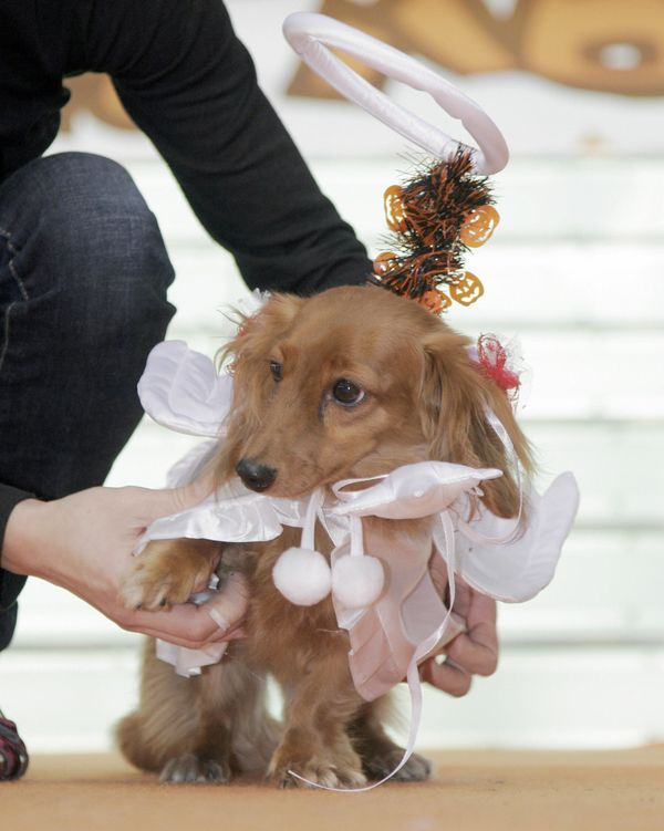 This dog looks like quite the angel now, but let's see if it's still an angel when it chews your favorite pair of shoes.