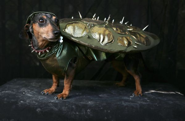 Bad guys don't stand a chance against this punk rock Teenage Mutant Ninja Doggie.