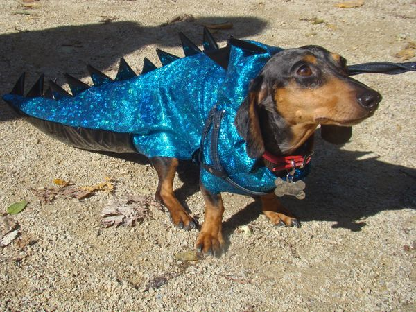 Dino dog must have been heavily inspired by his favorite movie, Jurassic Bark.