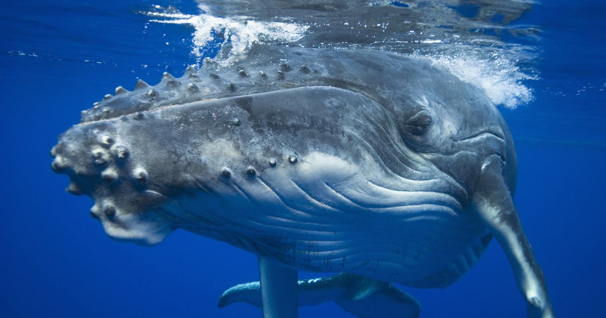 Scientists Are Seriously Worried About Whale Poop, And ...