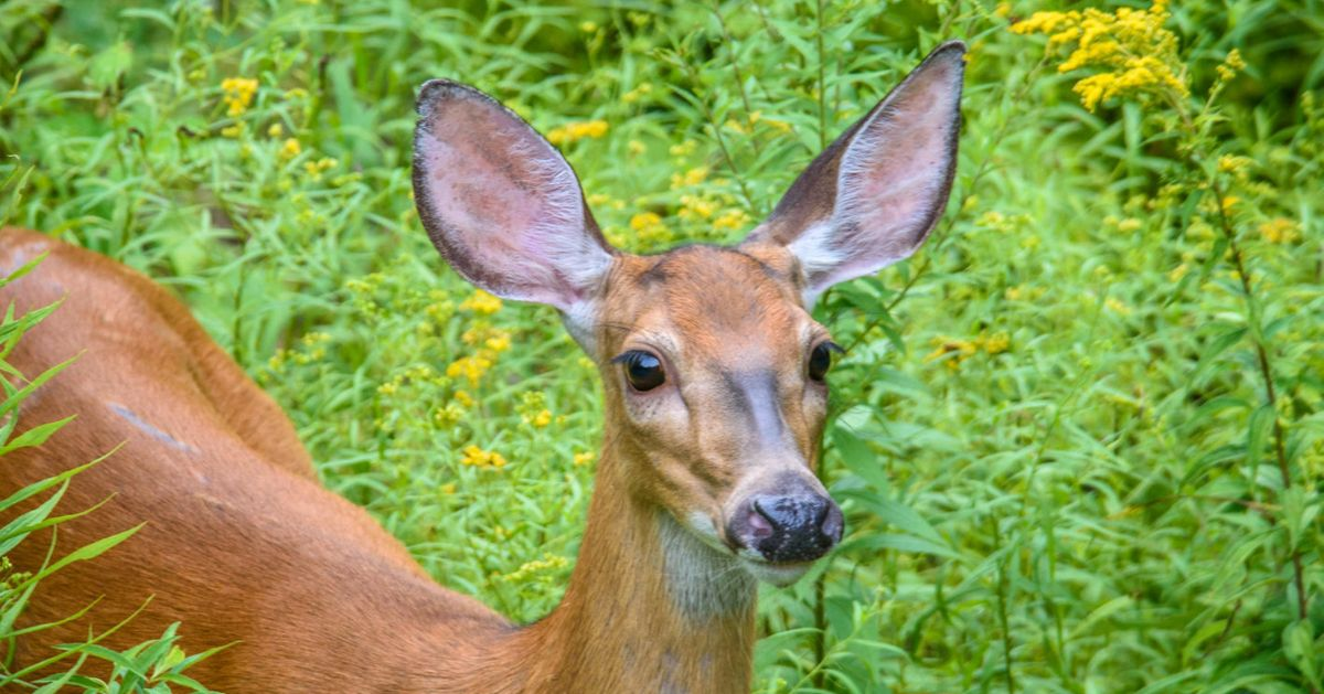 Deer Wanders Into Emergency Room