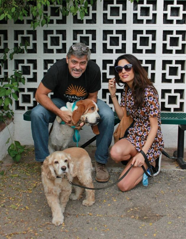 George Clooney and Amal adopted another dog today October 29 2015 56316bc014000093013c966a