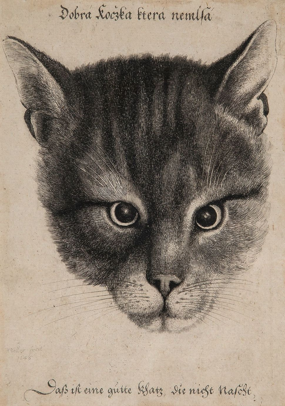 172. Hollar (Wenceslaus, 1607-1677) Head of a Cat (middle size) etching, 175 x 125 mm. (visible), light surface dirt, minor b