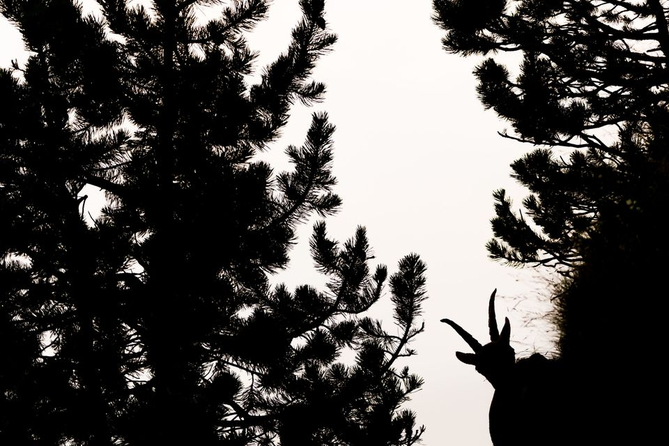 winne r | young photographers 15 to 14 ye ars Marius Luca Bast, GDT – Germany Silhouette I took this image of an Alpine ibex