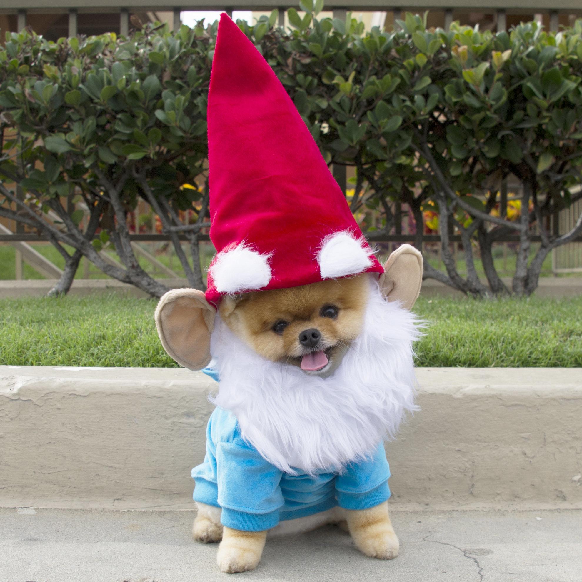 Halloween Pomeranian