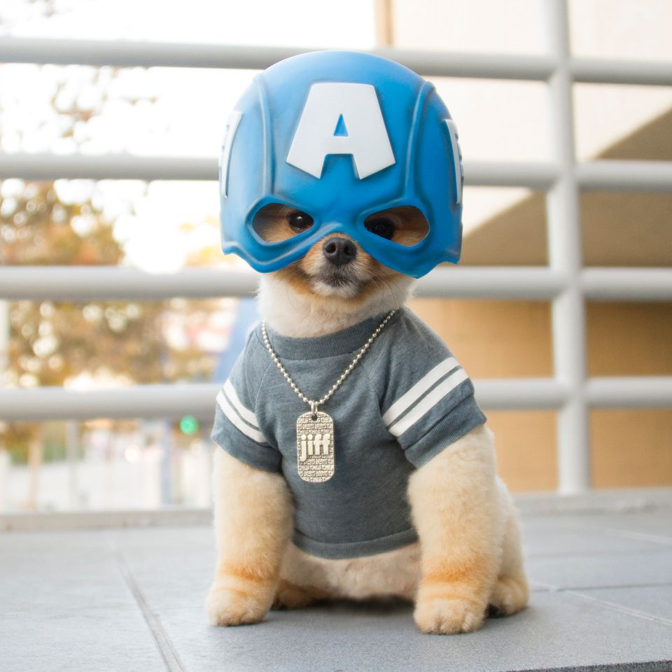 Better than Chris Evans'version? You decide. Note the personalized Jiff dog tag.