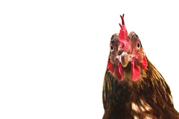 2 More Major Companies Vow To Transition To Cage-Free