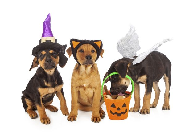 "While your four-legged friend may enjoy getting in on the Halloween fun, avoid a trip to the vet by <a href=""http://www.thedo"