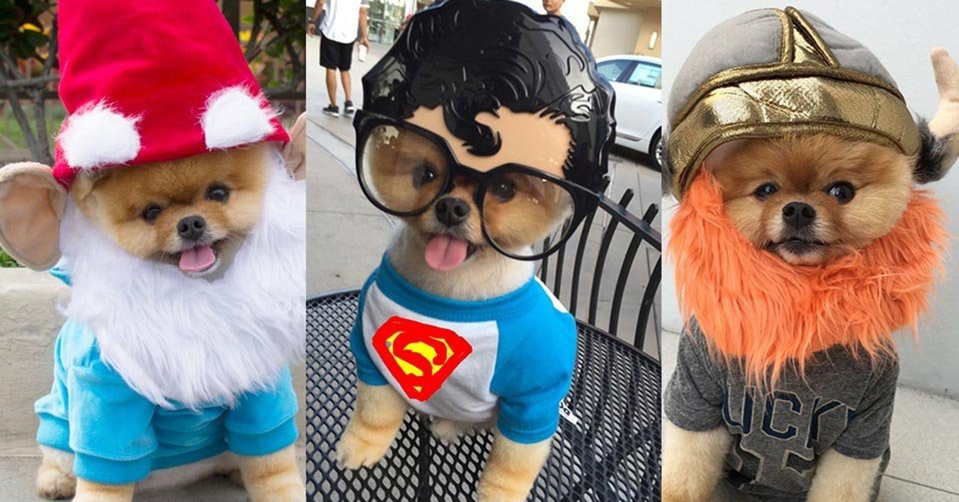 Jiff The Dog Just Won Halloween Huffpost
