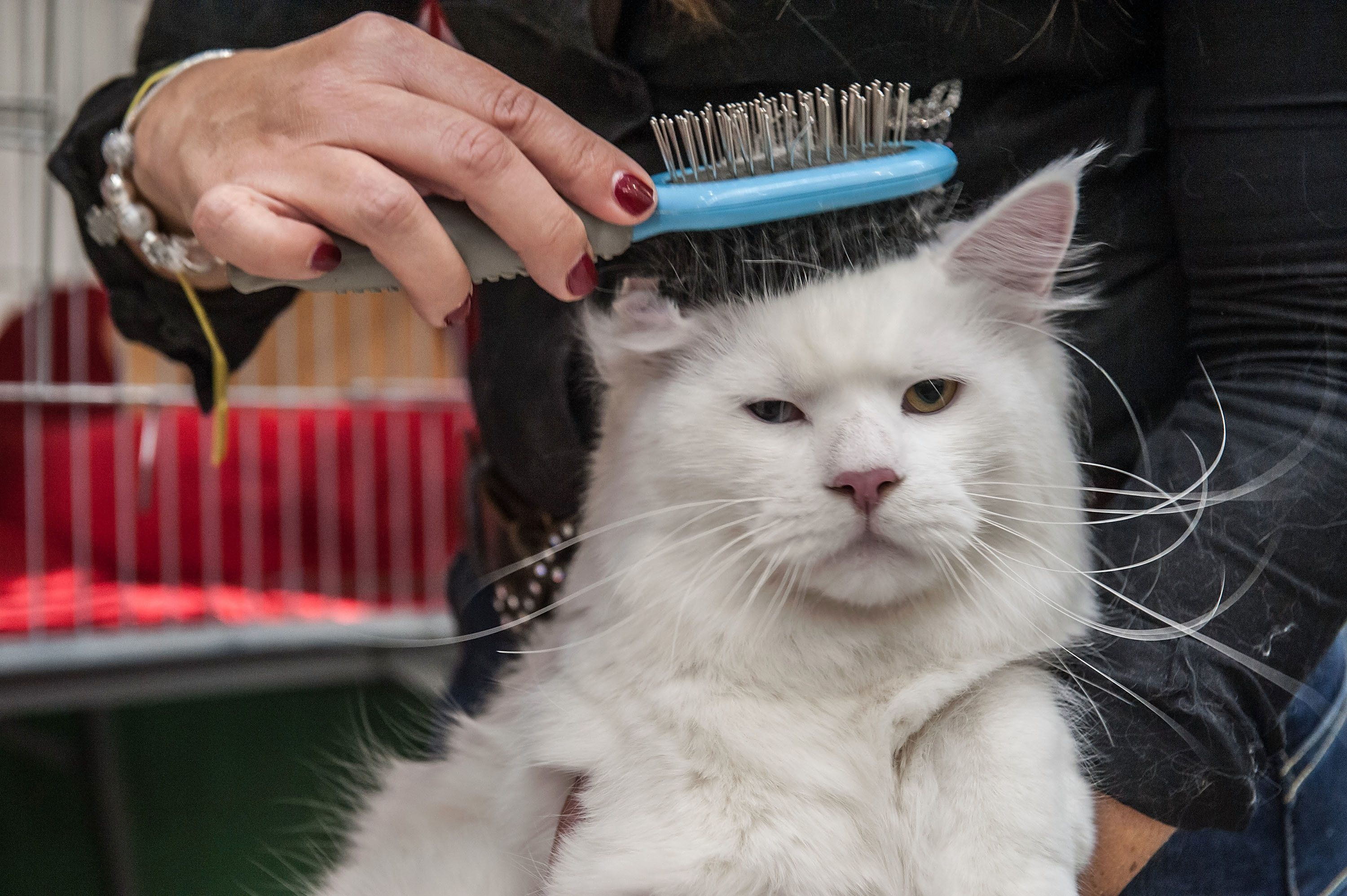 """Yes, because what I needed today was another brushing."""