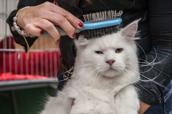 """""""Yes, because what I needed today was another brushing."""""""