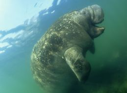 It's Manatee Awareness Month. Let's Celebrate.