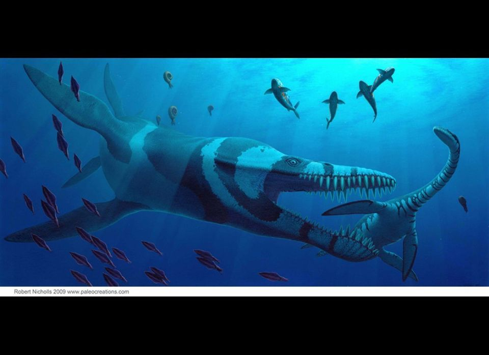 A 36-foot-long Pliosaurus attacks the plesiosaur Cryptoclidus, a marine reptile from the Late Jurassic Period. Also shown: th