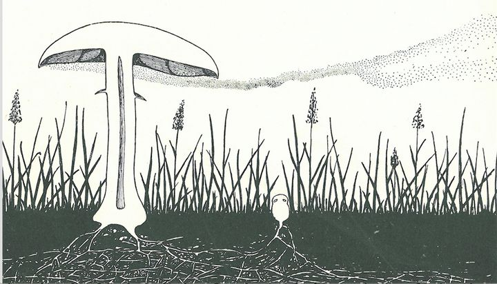 "Cloud of spores dispersed from the horse mushroom illustrated by A. H. R. Buller, the ""Einstein of Mycology,"" in 1909."