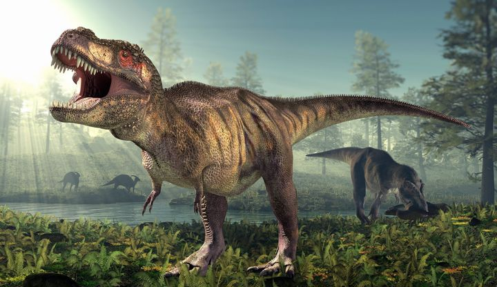 Scientists are finding more evidence that the Tyrannosaurus rex exhibited cannibalistic behavior.