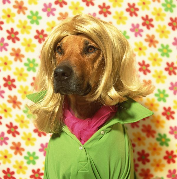 16 Animals Wearing Wigs And Looking Spectacular | HuffPost