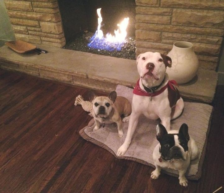 Luna with her foster siblings, Ollie and Captain Cowpants