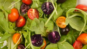 Salad showing high anthocyanin (purple)), high flavonnol (orange), high anthocyanin and high flavonol (indigo) and regular (red) tomatoes engineered to form the basis of healthier diets.
