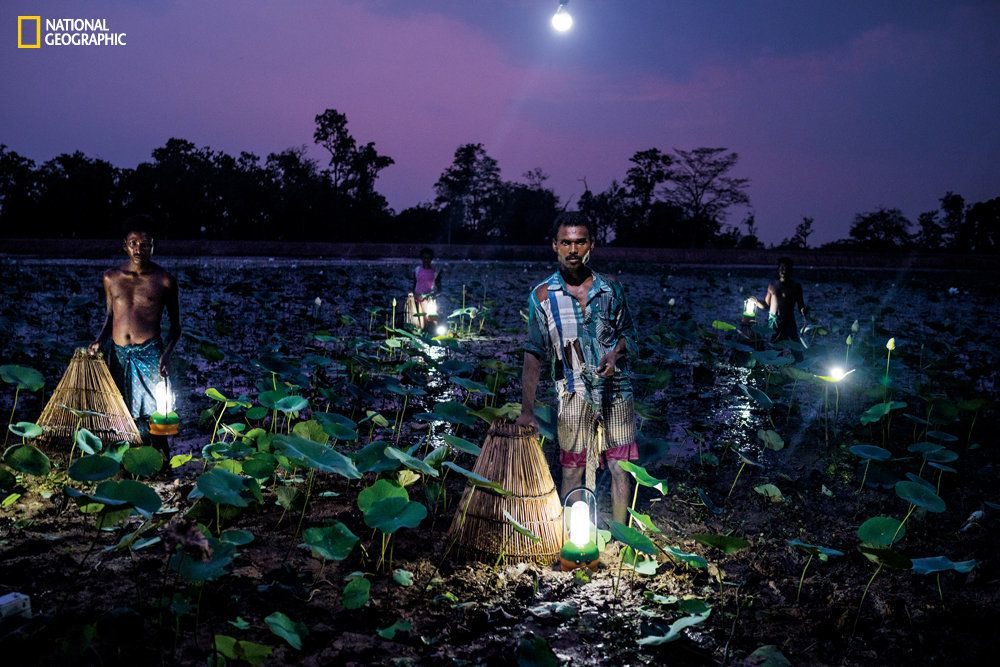 In India's state of Odisha villagers trap fish using cone-shaped baskets and solar light. Fewer than half of Odisha's 42 million residents use grid electricity.