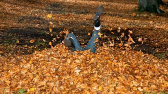Girl in leaf pile