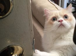 This Cat's Face When His Human Goes To Work Has Us Feline Very Sad