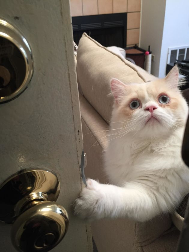 This Cat's Face When His Human Goes To Work Has Us Feline Very Sad ... Sad Cat Face