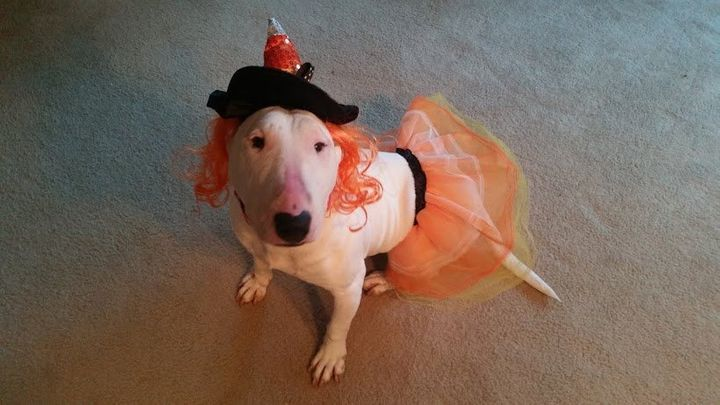 Millie is so receptive to new experiences she even cottoned to being dressed up in a tutu for Halloween.