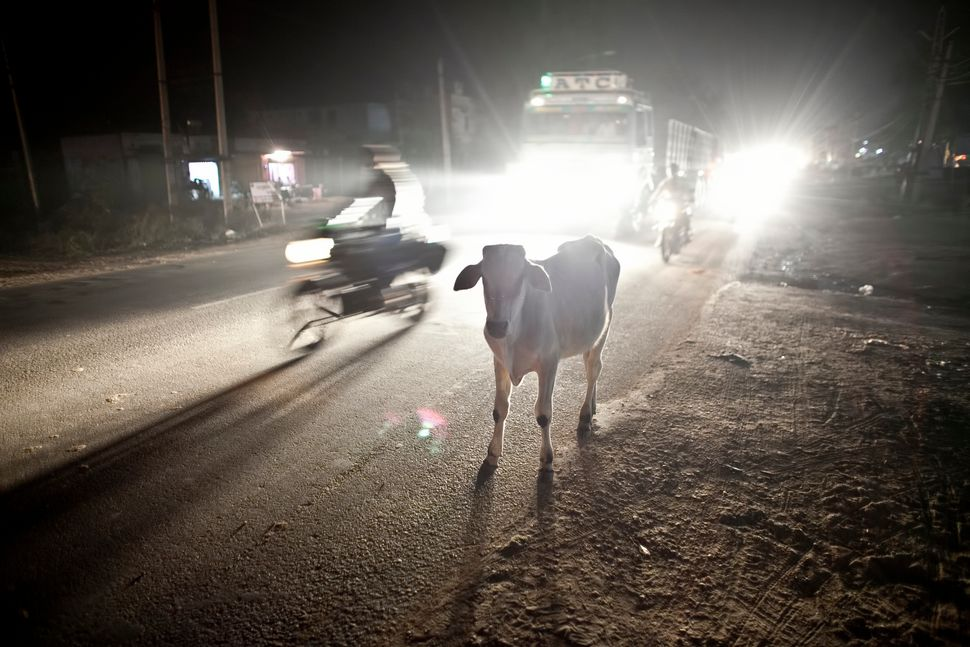 A cow stands on a road in Ramgarh, India.