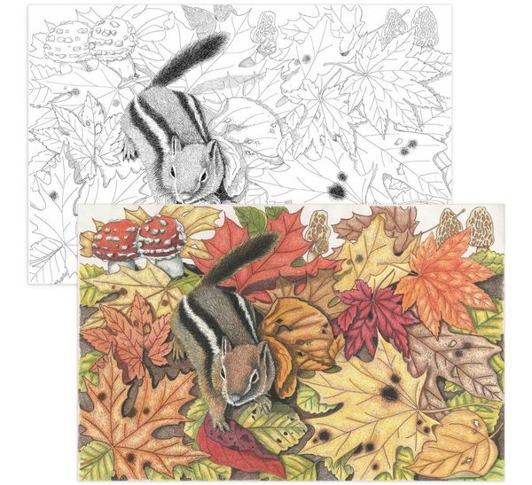 Crayola Launches Adult Coloring Books To Transport You Back To ...