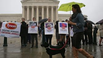 WASHINGTON, DC - NOVEMBER 10:  Activists with Mercy For Animals protest against Tyson Foods treatment of animals, in front of the Supreme Court November 10, 2015 in Washington, DC. Today the high court is hearing oral arguments in Tyson Foods v. Bouaphakeo, a class-action litigation case regarding the use of statistical formulas tied to a sample average.  (Photo by Mark Wilson/Getty Images)