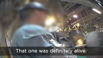 Animal rights activists filled an alarming undercover video inside of one of the nation's largest pork producers.