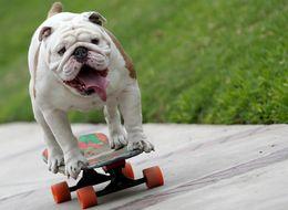 Watch Otto The Skateboarding Bulldog Totally Shred A World Record