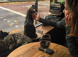 Move Over Cat Cafes, This Cat Pub Is Taking Over