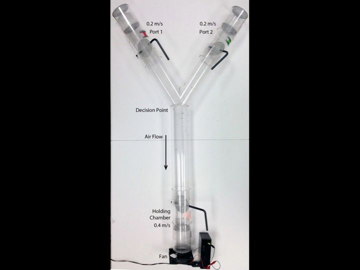 The Y-tube that researchers used in the mosquito repellent study.