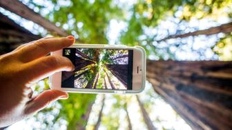 Low angle view of cell phone taking photograph of trees in forest