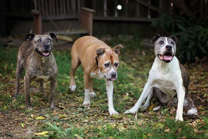 Gabby, far left, Duval,center, and Sunny, far right, became the best of friends in their later years. Duval and Sunny w