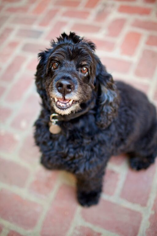 Guess who fell in love with this happy cocker spaniel named Einstein through an online video? None other than actor and
