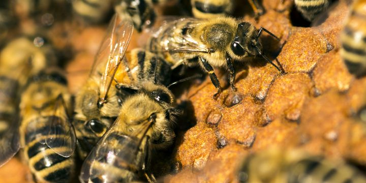 Here's to 9,000 years of working with bees.