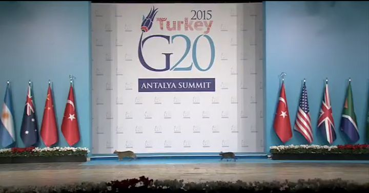 Three cats, two seen here, nearly stole the show ahead of a meeting between world leaders at Sunday's G20 summit in Turkey.