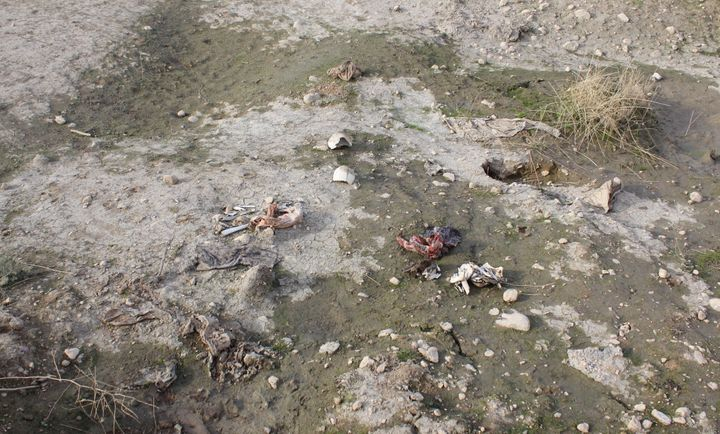 Bones, thought to be those of Yazidi women killed by ISIS, are scattered across muddy earth in Sinjar, Iraq, on Nov. 15.
