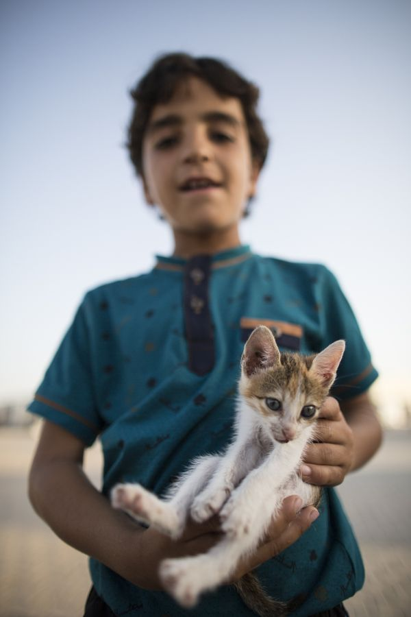 Halim Rasim, 6, a Syrian refugee boy who fled Idlib with his family, poses with his pet cat at a tent city in the Akcakale di