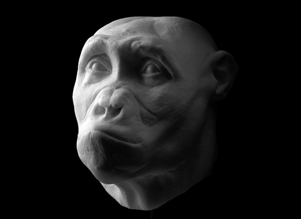 Sahelanthropus tchadensis Lived 7 million years ago