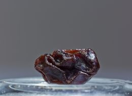 A Single Raisin Can Predict Your Child's Intelligence
