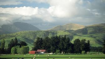 sheep farming, south island, new zealand