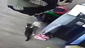 Crime-busting kitty Daisy was caught on camera checking out the suspect's bag