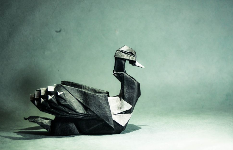Origami Common Loon, design by Artur Biernacki