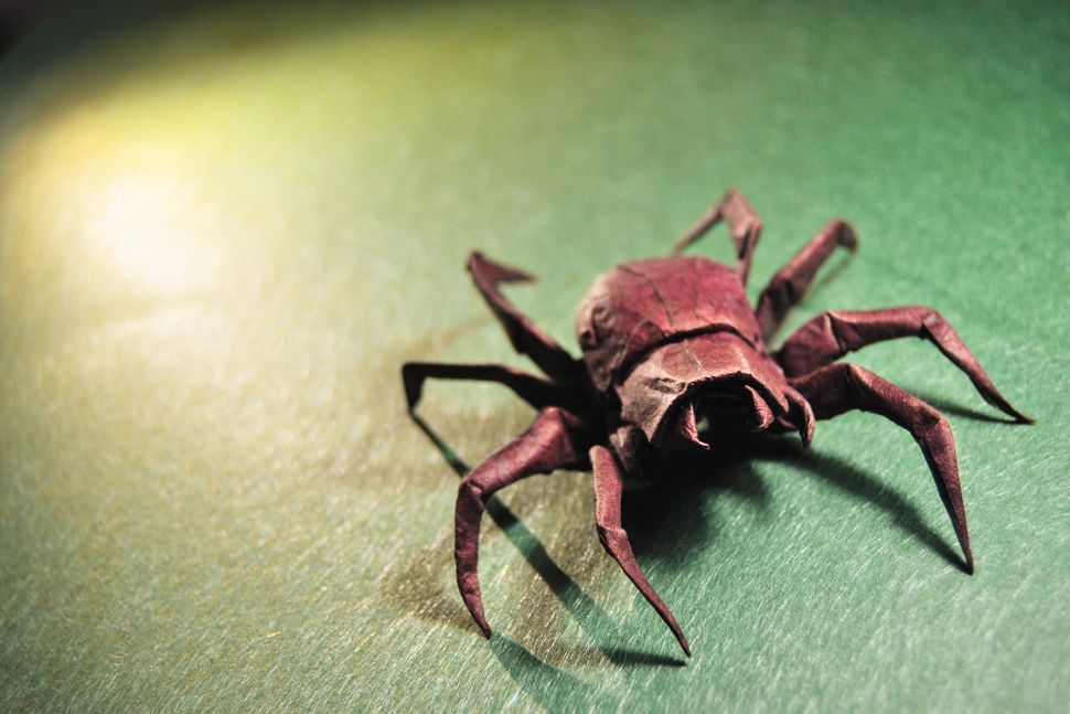 Origami Wolf Spider, design by Brian Chan